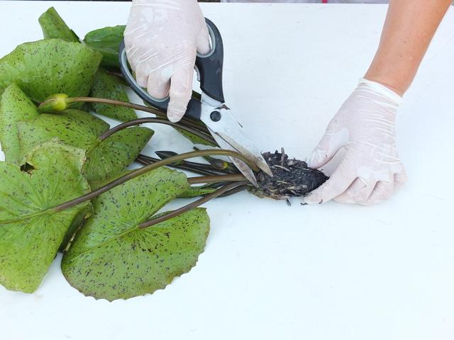 Taglio della vegetazione