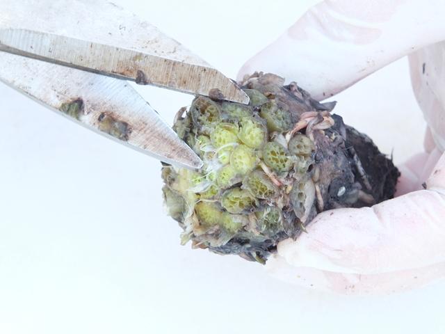 Eliminazione parte vegetativa