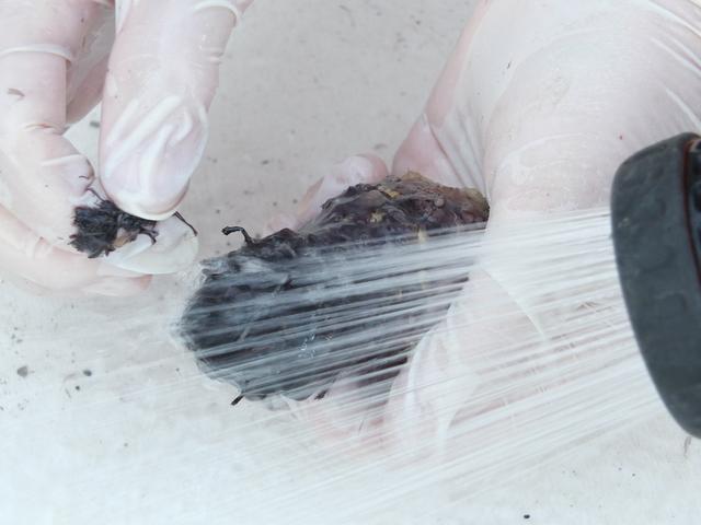 Lavaggio del tubero