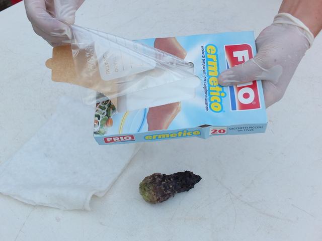Inserimento del tubero in un sacchetto per surgelati